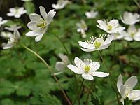 005_flower2.jpg